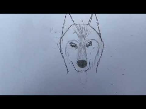 How To Draw a Siberian Husky