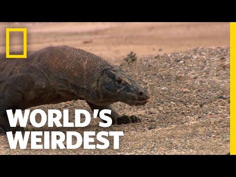 Toxic Dragon | World's Weirdest