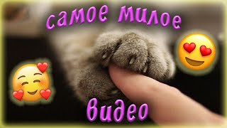 САМОЕ 🥰милое видео😻🐾 котьи лапки🐾