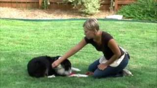 Dog Training-rollover- Dogclassonline.com