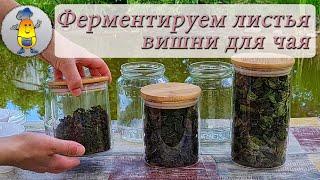 Ферментированный чай из вишневых листьев Как ферментировать листья вишни от А до Я