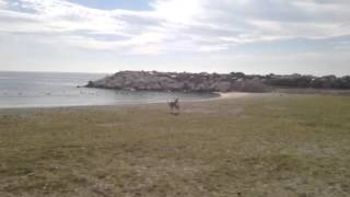 Пират -- собака-конь на выпасе :) (слепая собака)