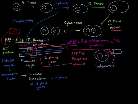 HPVs and Cervical Cancer Part 7