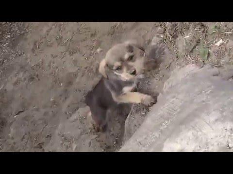 Émouvante rencontre d'une femme soldat et de son chien