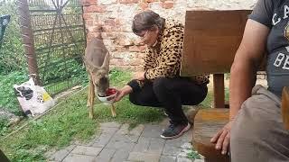 Dzikie zwierzę w domu