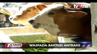 Dugaan serangan bakteri Antraks yang terjadi di Jawa Timur, berdampak terhadap penjualan hewan di Jo.
