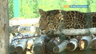 леопард, кенгуру и другие новые обитатели белгородского зоопарка
