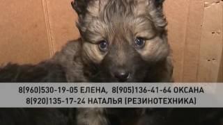 В подъезд дом на Калинина подкинули коробку с щенками
