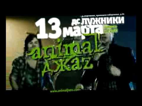 13 марта Animal Джаz презентует новый альбом в Лужниках