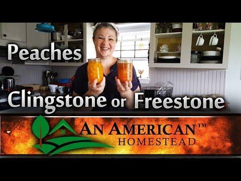 CANNING PEACHES: Choosing Clingstone or Freestone