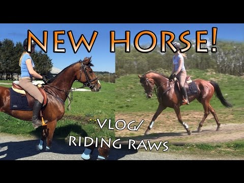 MEET MY NEW HORSE (Vlog/riding raws)