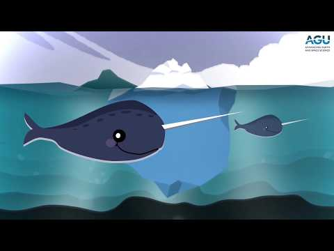 Listen to narwhals click, buzz and whistle
