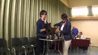 Nederlandse Cairn Terrier Club Reuen 18-24 Maanden