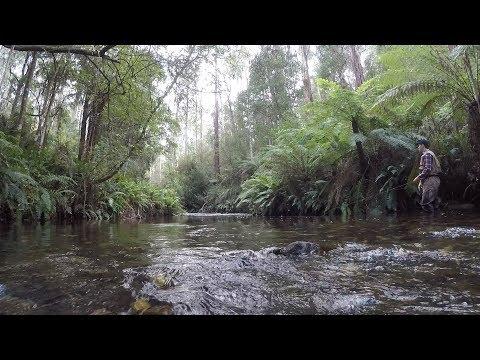 Tanjil River Fly Fishing