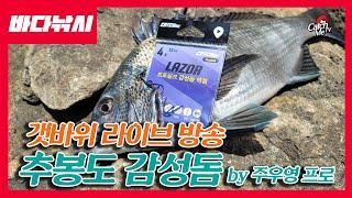 [라이브] 추봉도 올 시즌 마지막 감성돔 낚시 feat…
