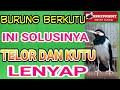 Menghilangkan Kutu Burung Dengan Cepat Nkutu Hilang Burung Maksimal  Mp3 - Mp4 Download