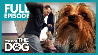 Control Freak Yorkie: Bailey | Full Episode | It's Me or The Dog