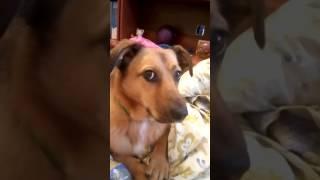 Собака Найда говорит: мама, нормально, Рома