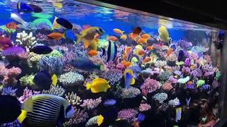 The Best Reef in Europe? Amazing SPS Reef Tank in Germany