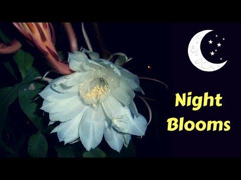 10 Most Beautiful Night blooming Flowers In The World | GardenGraduate