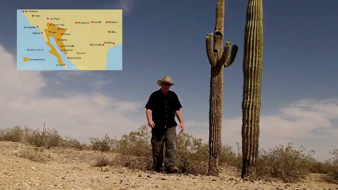 Beautiful Arizona - The Saguaro Cactus