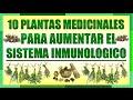 10 Plantas Medicinales que Ayudan a Aumentar tu Sistema Inmunologico