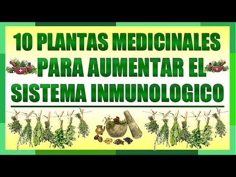 hierbas inmunes naturales para la diabetes