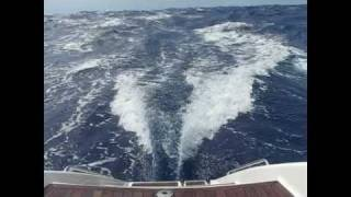 Big cat sailing in a gale-Awesome waves, and sail control.avi