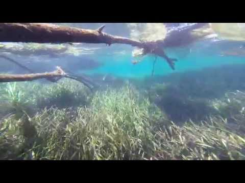 Family trip to the beach and Ichetucknee Springs State Park fl. 2015