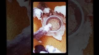 Толпа щенков кушают из миски