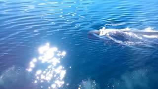 Кашалот# кит # море