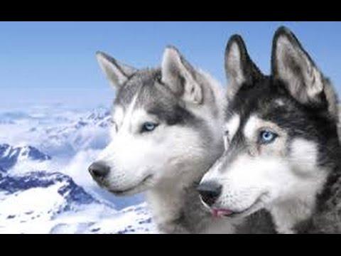 смотреть смешное видео собаки
