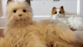 Hasbro Joy for All Cat versus LuLu My Cuddlin Kitty Comparison