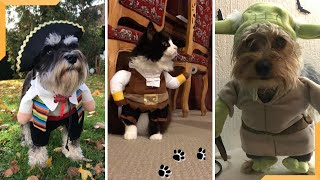 Dogs and Cats in Costume Funny Vines | Funny Animal Video! 2020