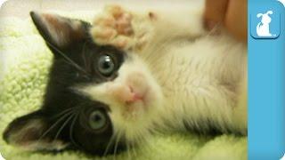 Belly Rubs for Adorable Kitten - Kitten Love