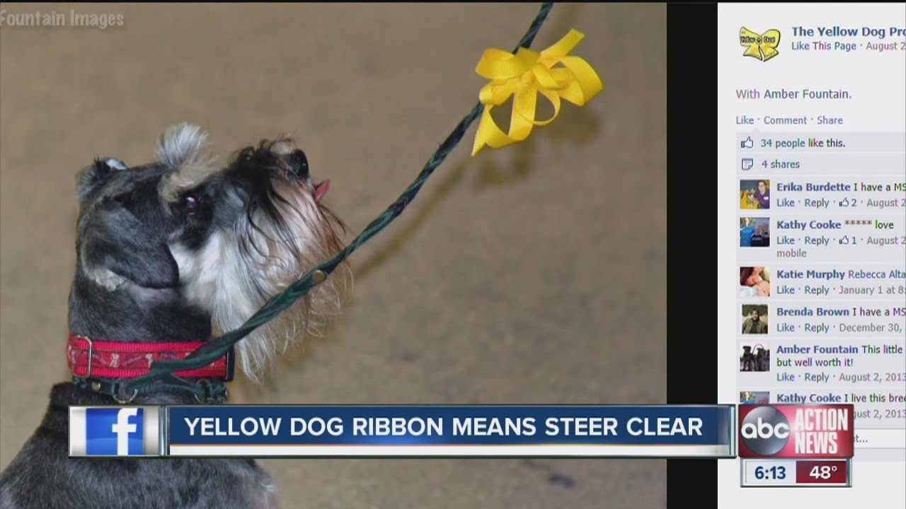 Yellow Dog Project A Yellow Ribbon On A Dog S Leash Sends Important Message To Strangers Youtube