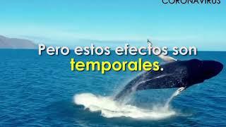 INFORMES | EL LADO B DEL CORONAVIRUS