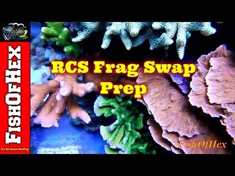 RCS Frag Swap Prep | That Fish Place, Lancaster PA