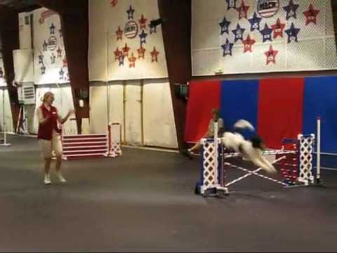 AKC Novice Agility