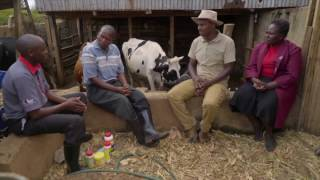 Shamba Shape Up Sn 07 - Ep 6 Rice, Dairy Cows, Solar Home System (Swahili)