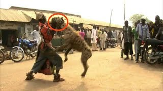 When Hyenas Attack