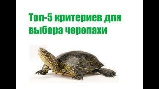 топ 5 Критериев Для Выбора Черепахи & Как Выбрать Черепаху.Ветклиника Био-Вет