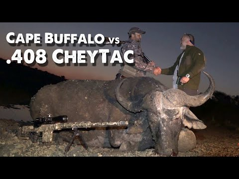 Cape Buffalo Vs CheyTac .408 - 300 Meter Long Range Shooting