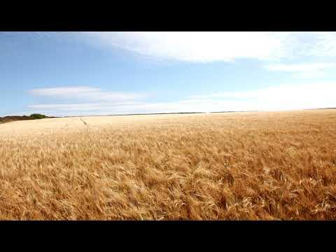 Doris Day - Whatever Will Be, Will Be (Que Sera, Sera) (Samsung Galaxy: The Future)