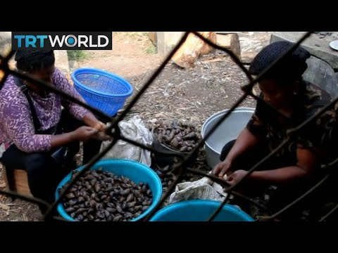 Delicate Deals: Snail business turns fast profits in Cameroon
