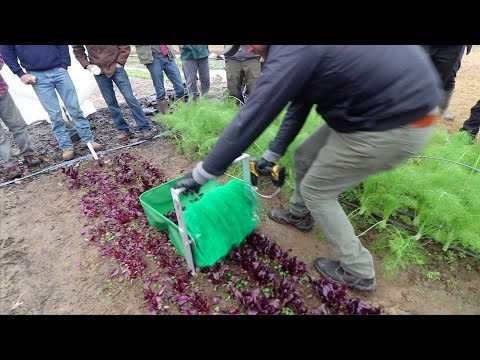HARVESTING GREENS IN THE FIELD!!
