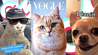 August 2020 Funny Cute Tik Tok Animals Compilation(Pt.10)