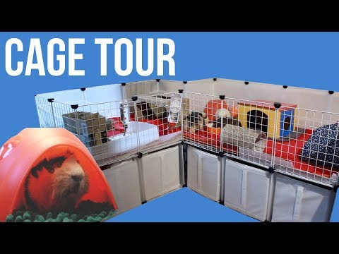 Cage Tour & Updated Layout | Guinea Pigs