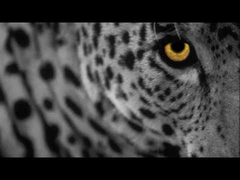 Minilogue - The Leopard (Extrawelt Remix) [HD]