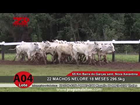 LOTE A04